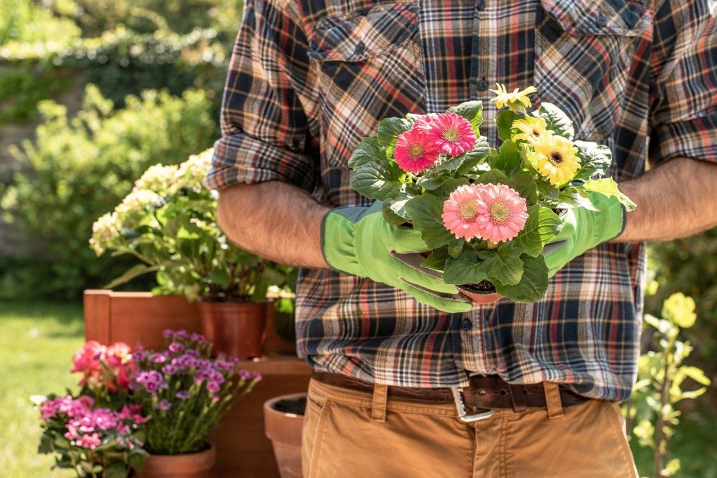 gardening-and-home-living-tips-and-advice