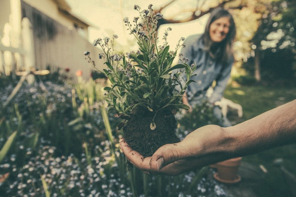 gardening-and-home-living-blog