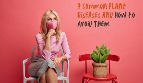 7 Common Plant Diseases and How to Avoid Them hollow